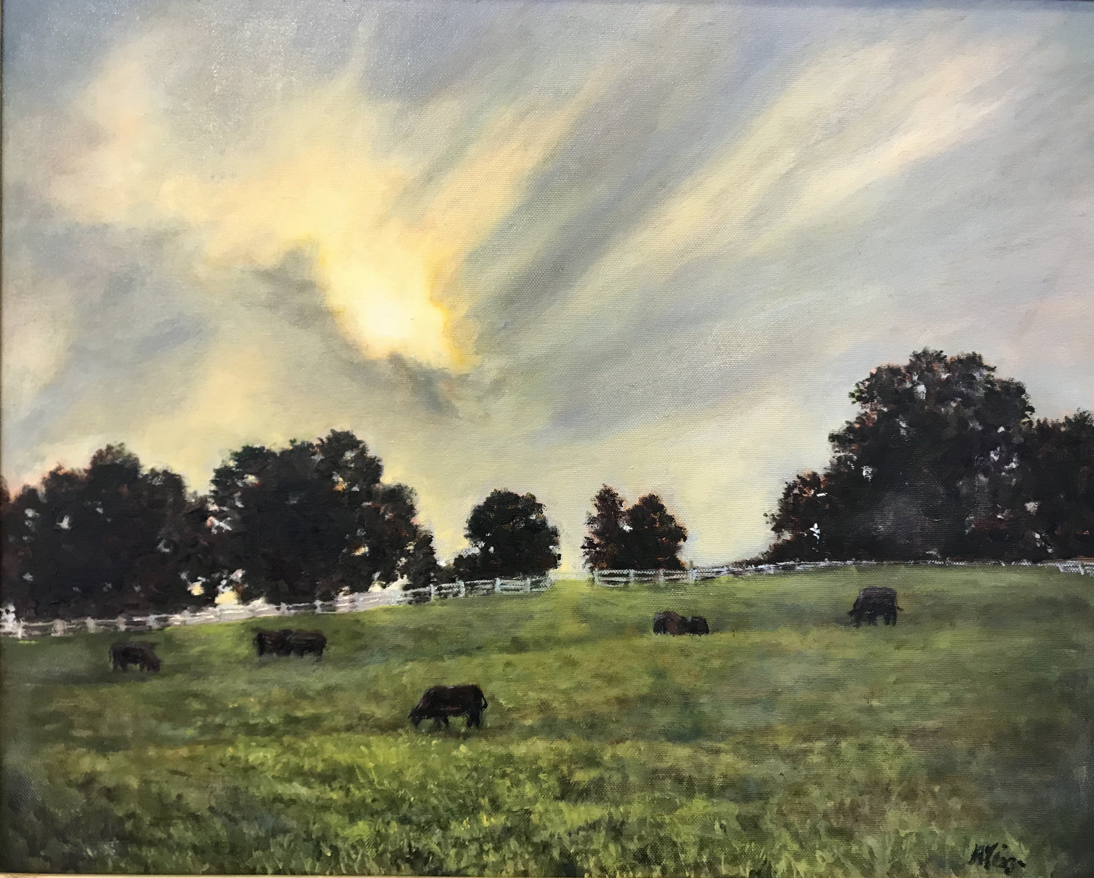 Cows,pastoral,sunset,farmland,sunlight,field,grazingcows
