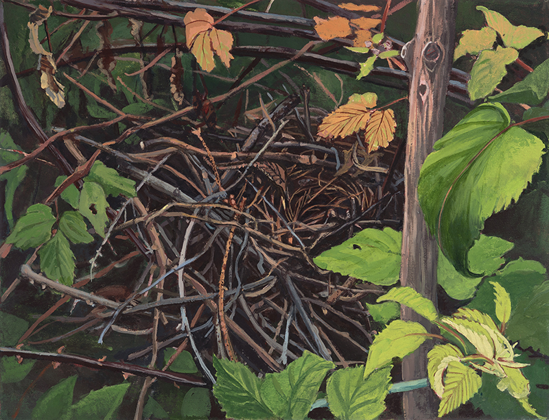 Nest, realism, botanical