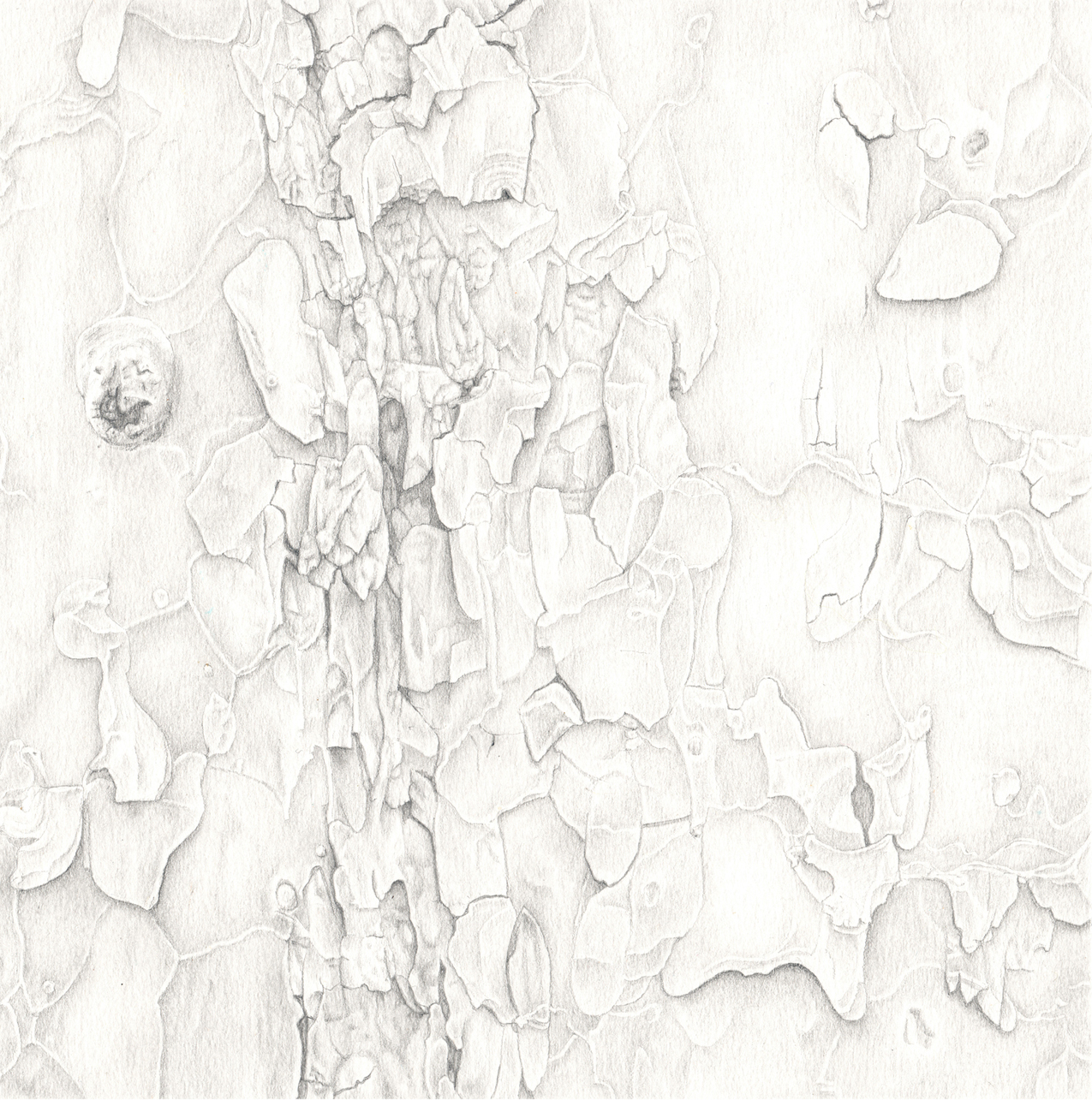 Observational realism, graphite on paper, nature, abstraction