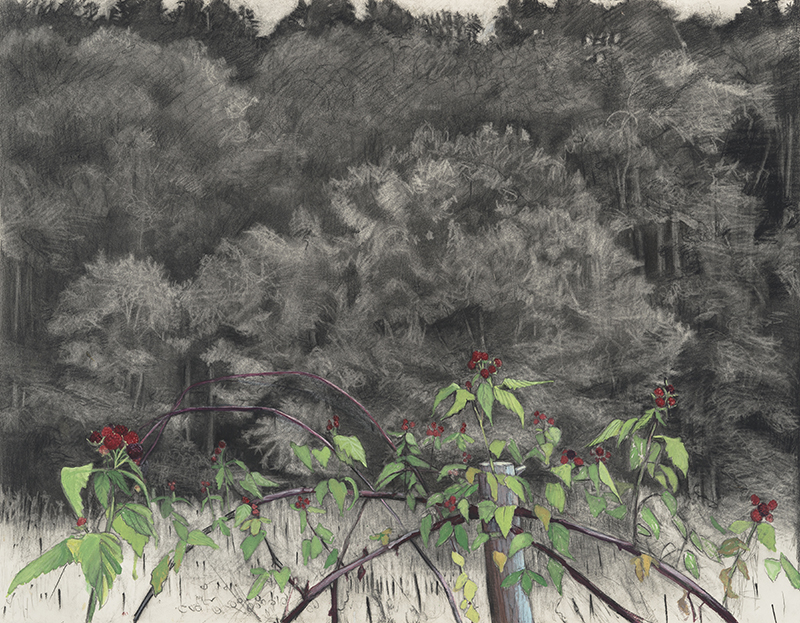 Botanical, landscape, drawing
