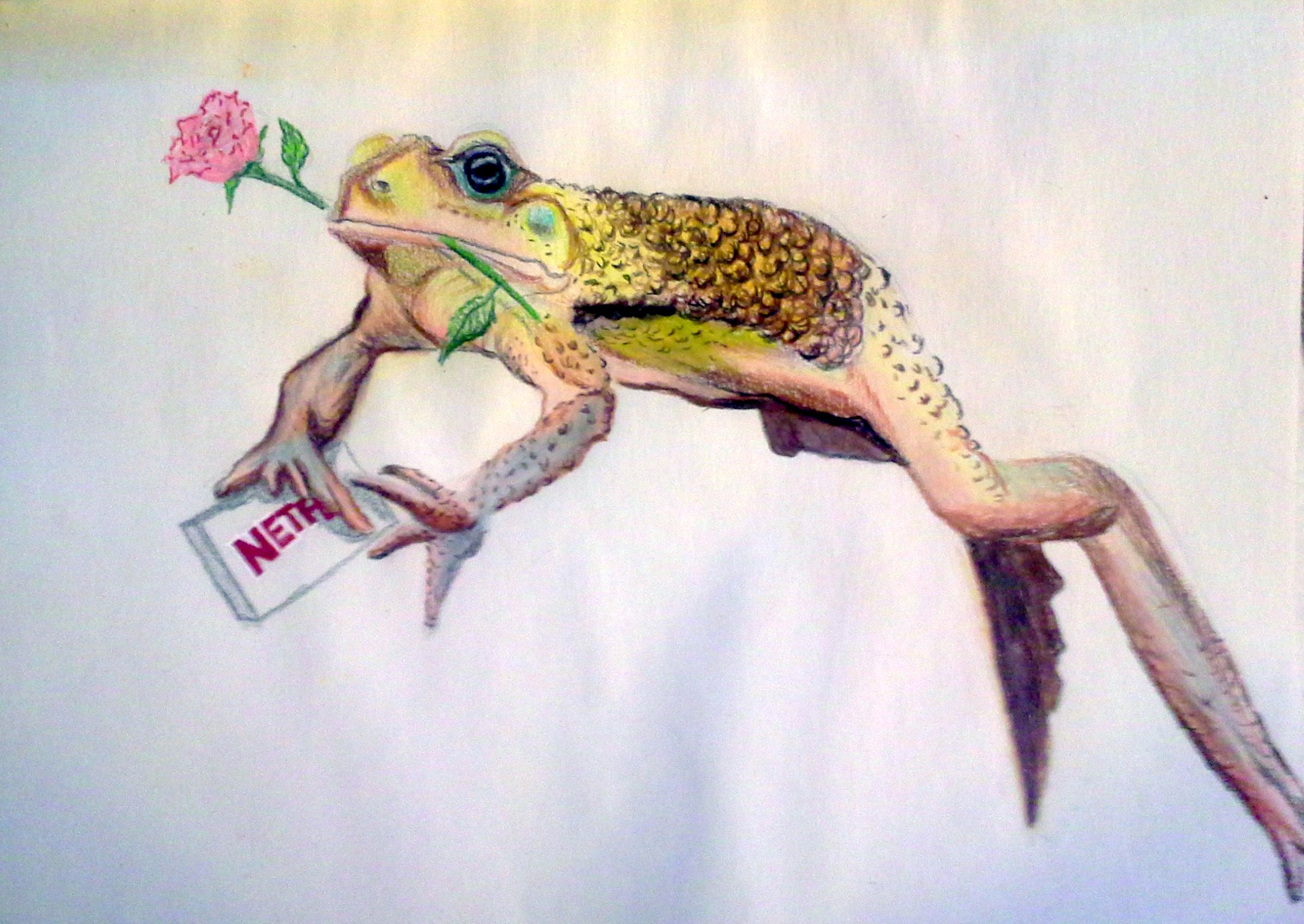 a frog with a rose and gift