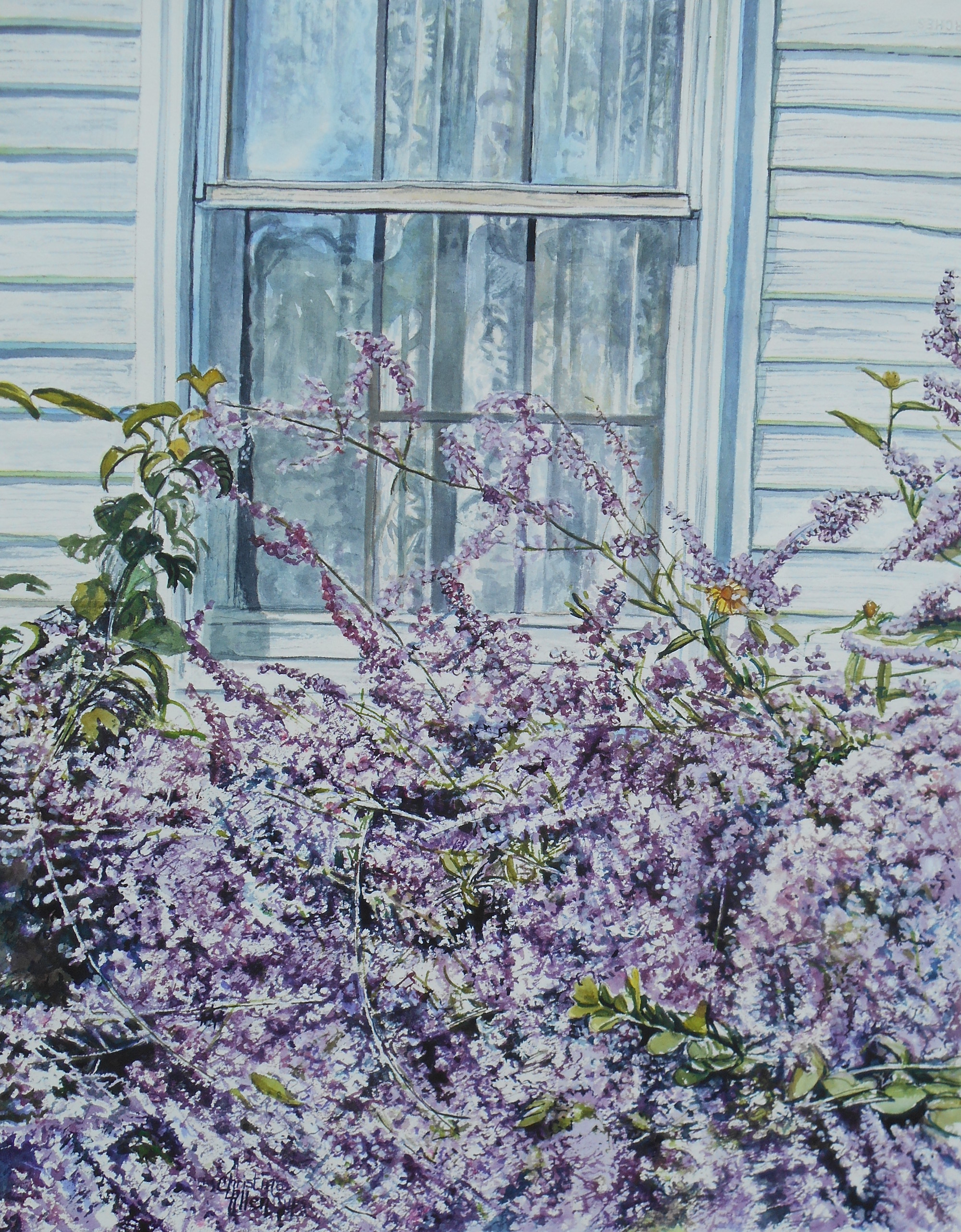 Buddleia in Front of a Window