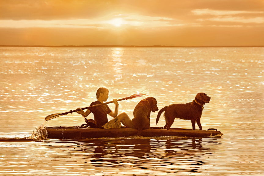 Two chocolate labrador retrievers on a kayak with a boy paddling in a chesapeake sunset .