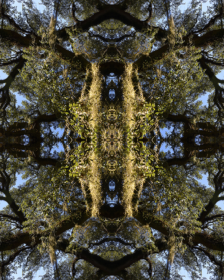 Abstract color photograph investigating interactions of the visual beauty & complexity of southern oak trees.