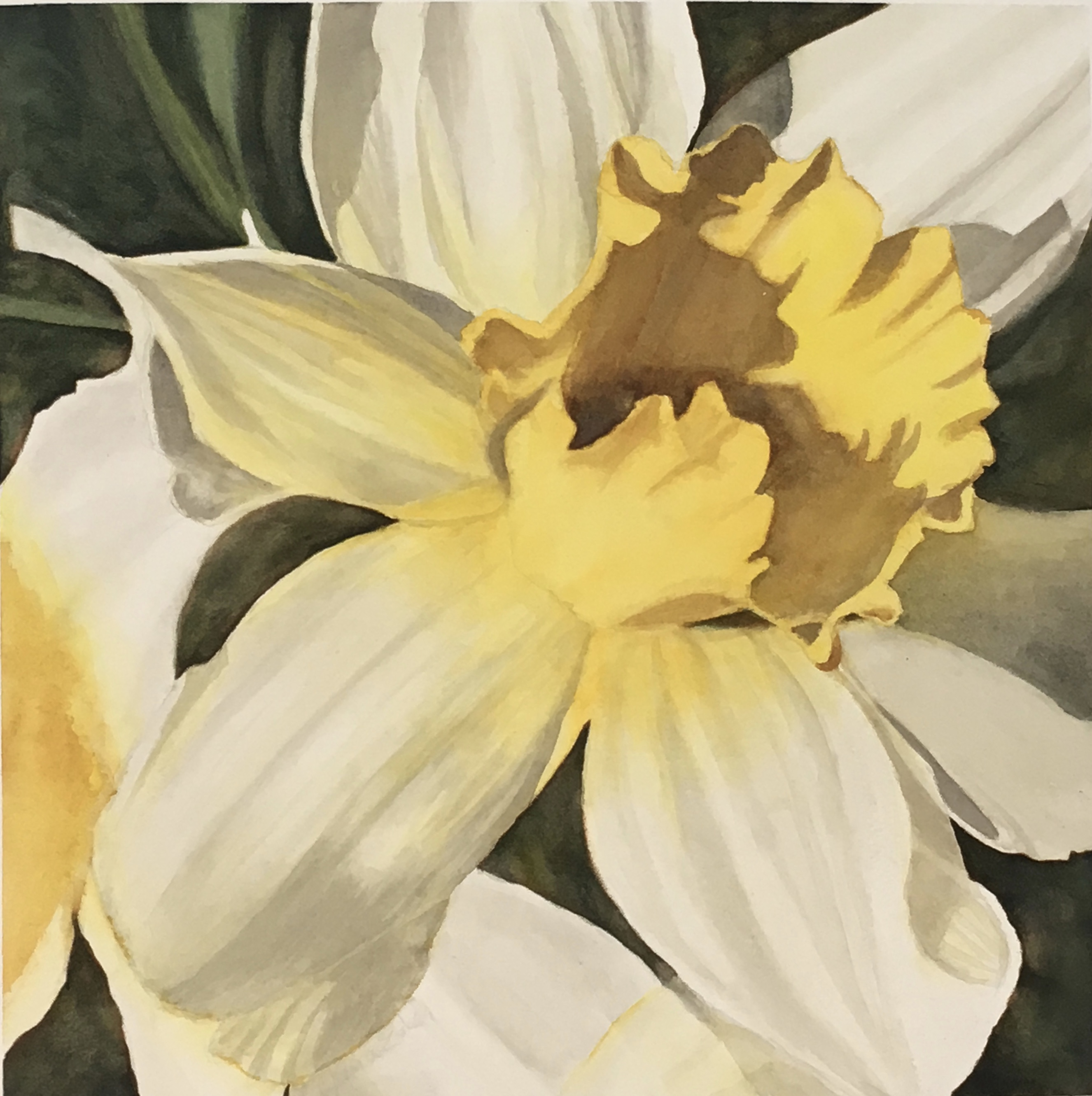 large daffodil flower, watercolor