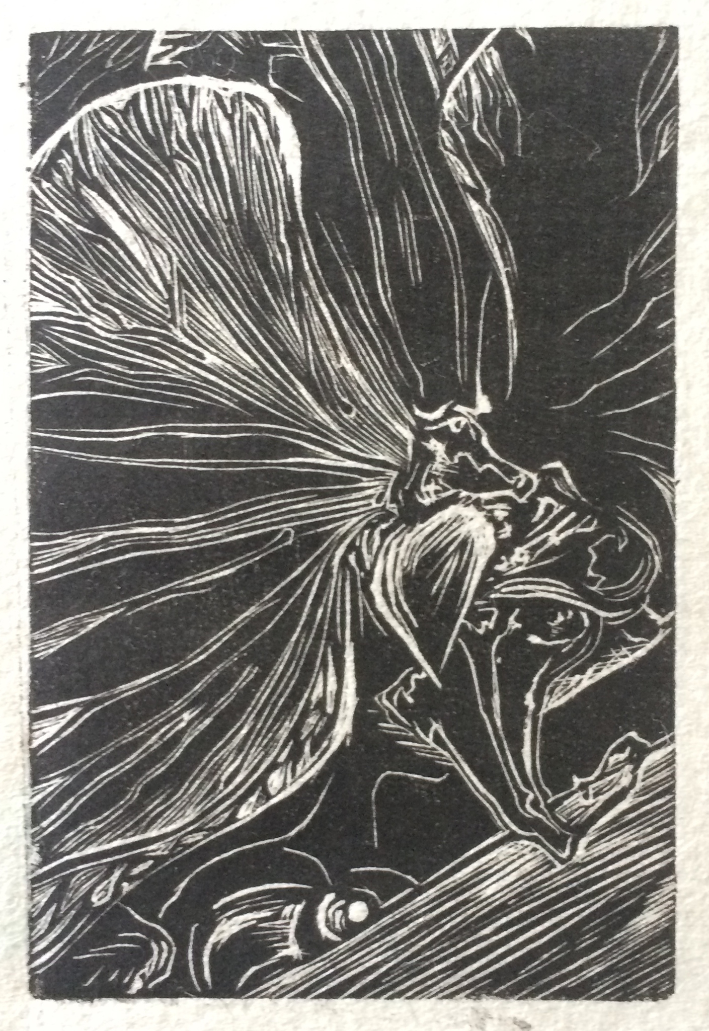 unfold orchid wood engraving 2 inces by 3 inches