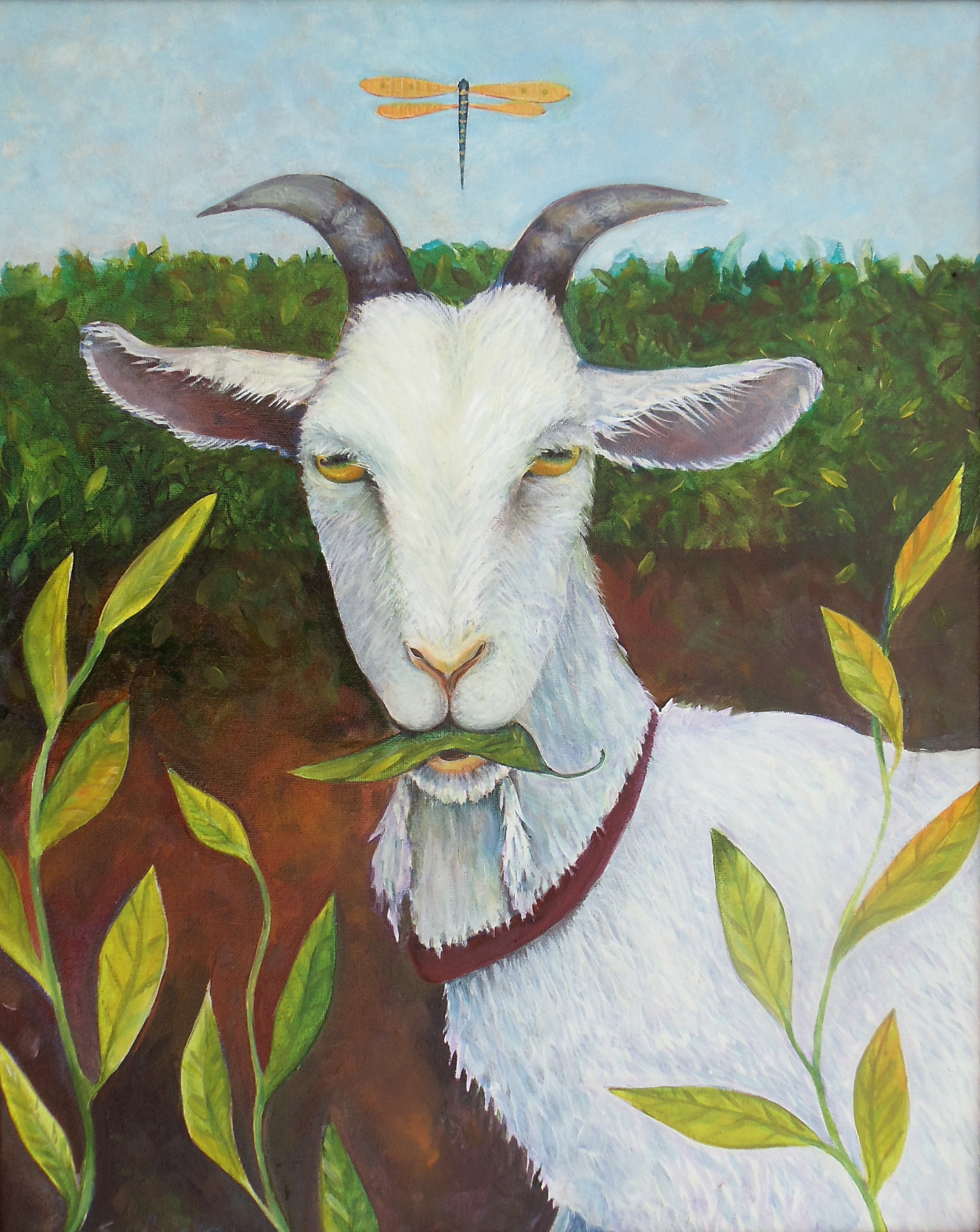 portrait of fat Lester, our white goat with a dragonfly hovering between his big horns