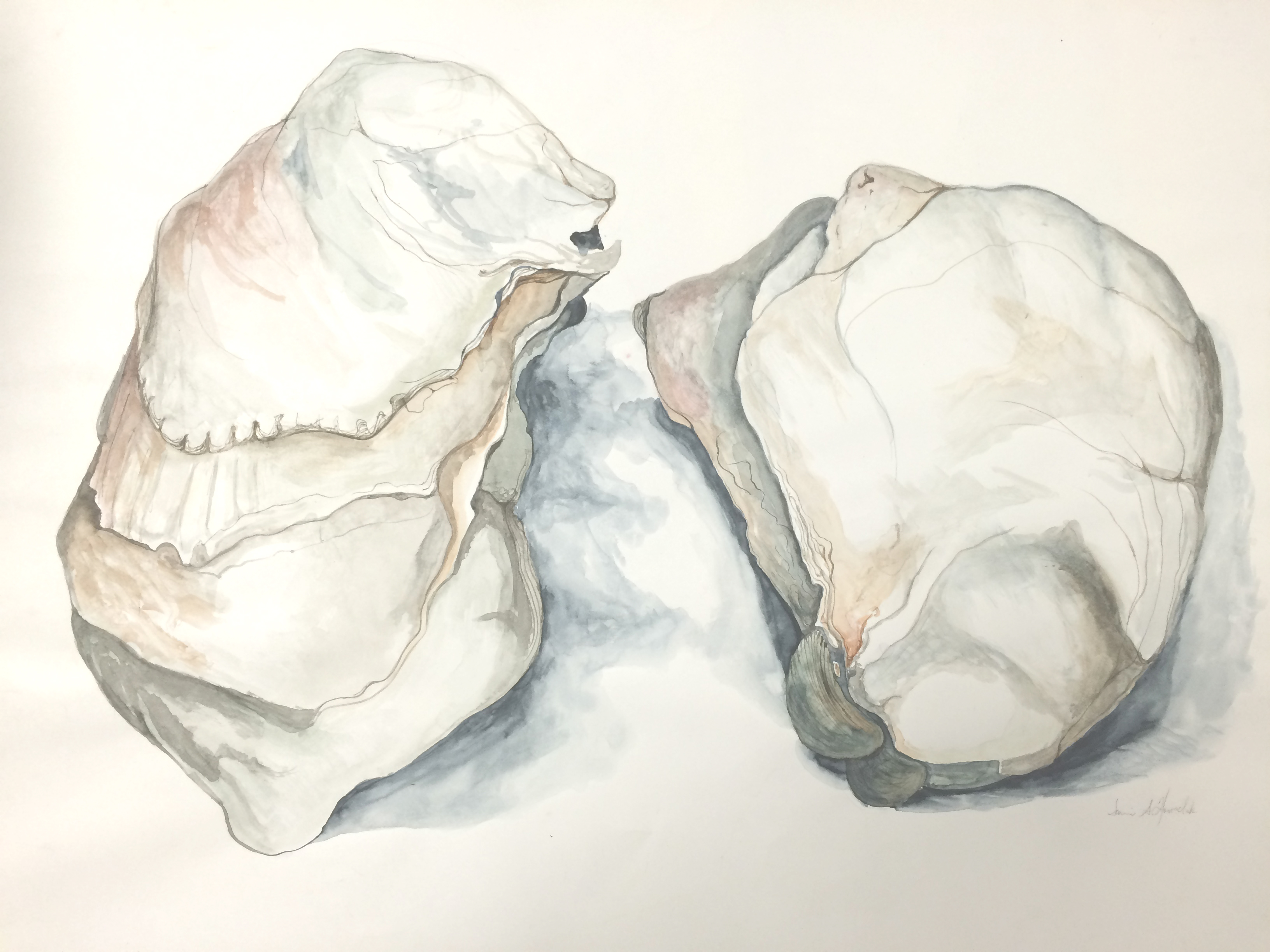 oyster shells watercolor 18 inches by 24 inches