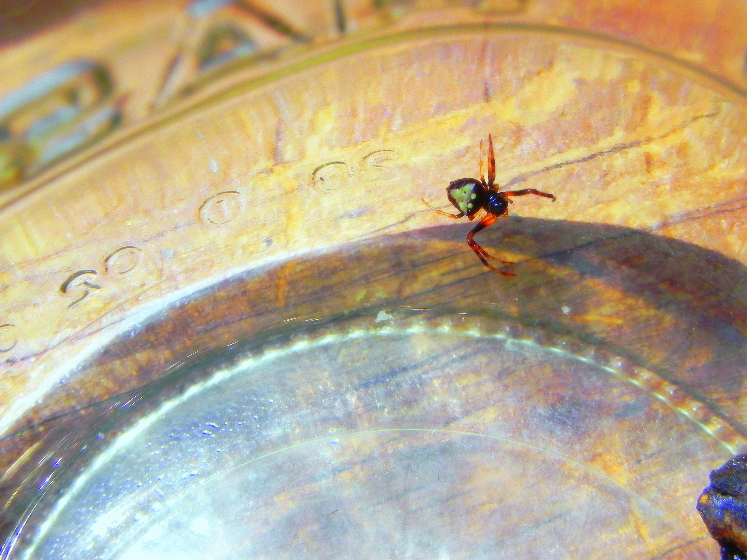 Digitally manipulated macro photograph of spider dropping into a pie plate.